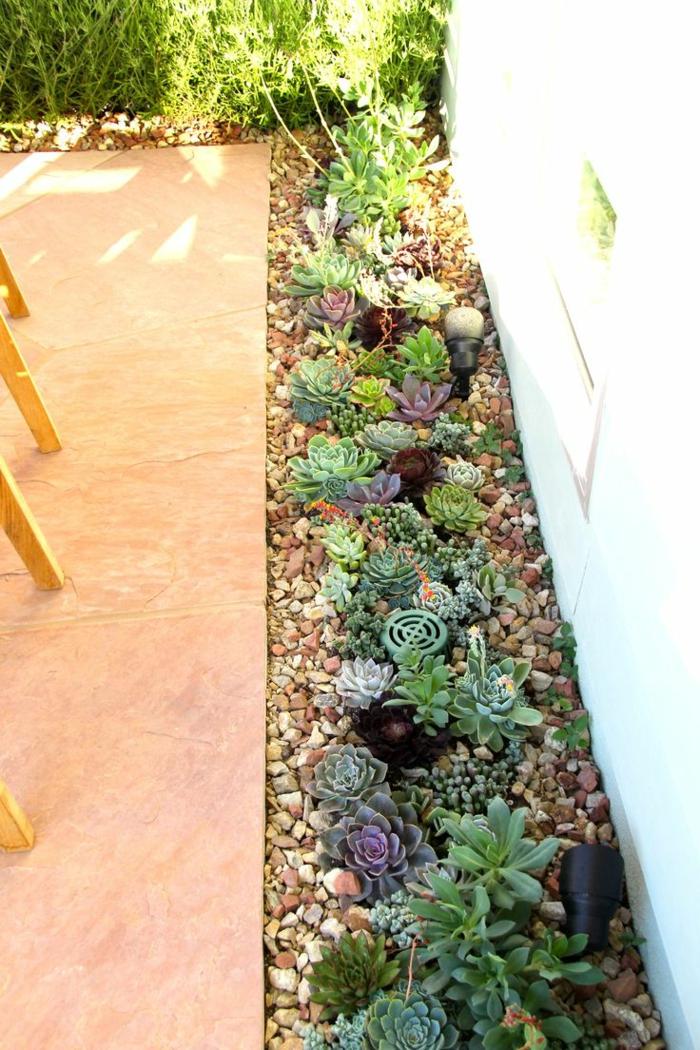 plantes grasses et cailloux dans le jardin, plantes succulentes d'extérieur, rosettes en couleurs diverses