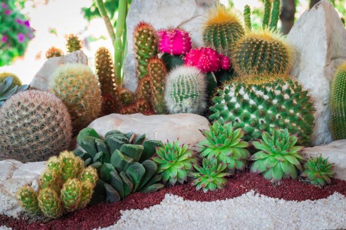 cactus et succulentes, petite rocaille décorative, cactus fleuri, design de jardin de succulentes