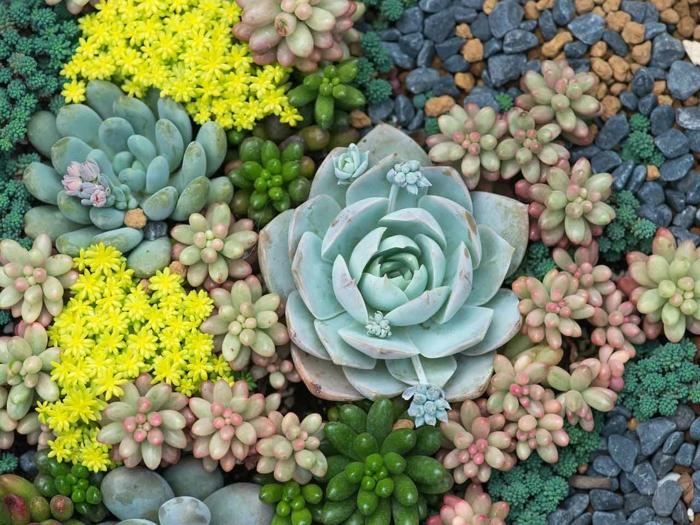 plantes tapissantes, joli tapis de petites plantes grasses en vert, jaune, vert menthe, modèle de jardin
