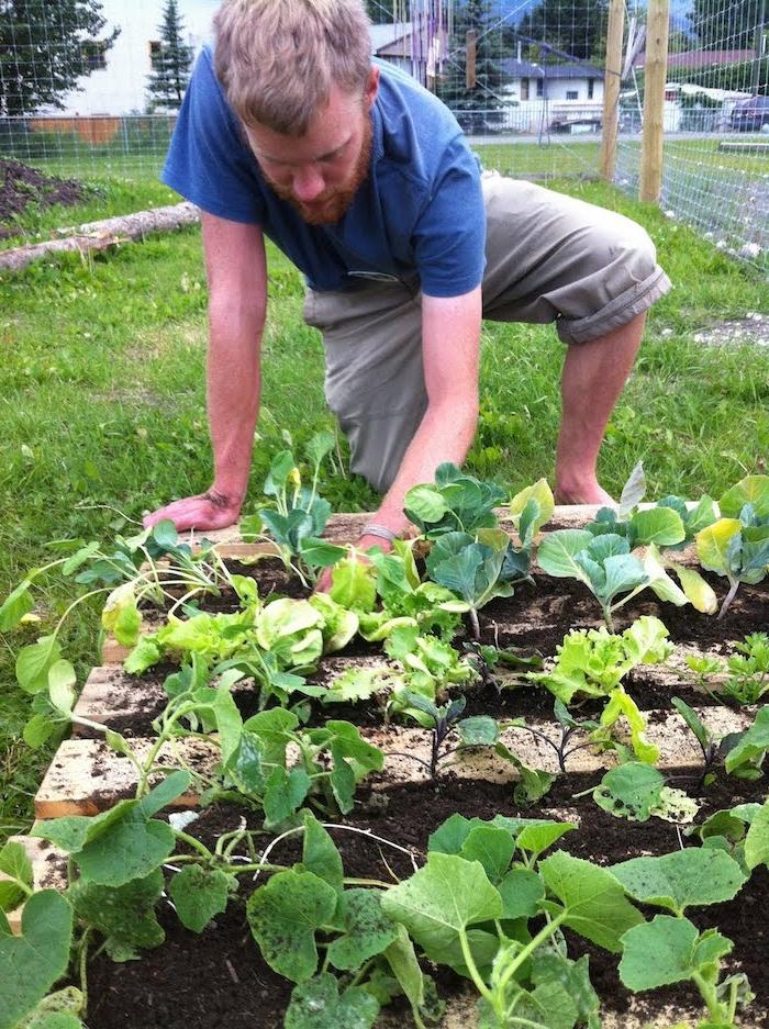 comment faire un potager soi meme avec des courgettes fraises et autres cultures légumes dans le jardin