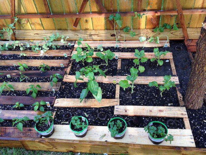 cultiver des légumes dans son jardin dans une palette de bois avec terreau à l intérieur, carré potager diy