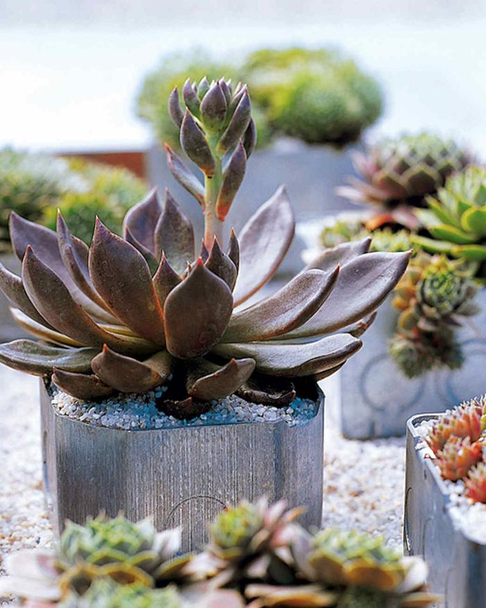 plantes grasses exterieur, jolie plante grasse en pot, arrangement avec pots de fleur