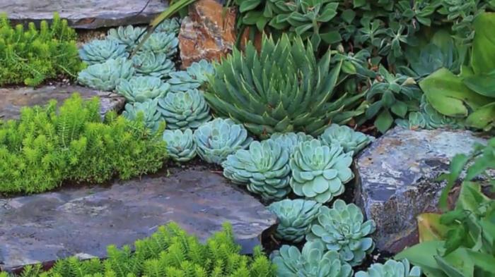 grandes pierres dans le jardin, succulentes divers, rocaille intéressante, arrangement de plantes et pierres