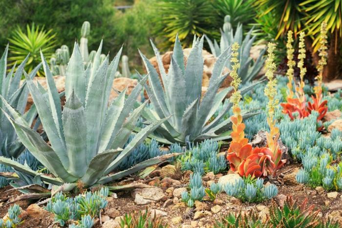 aloe élevé à l'extérieur, cailloux, palmiers, plantes exotiques, poule et poussins
