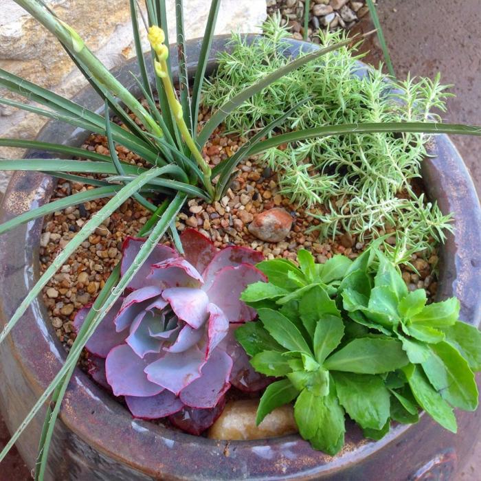 plante exterieur en pot, cailloux, comment élever les plantes grasses, succulente plante