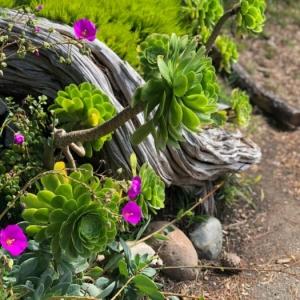 Les plantes grasses d'extérieur - créez un jardin exotique facile à entretenir
