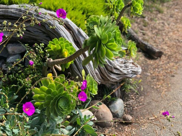 bois flotté, plantes grasses d'extérieur, pierres, plantes fleuries, arrangement avec plantes et objets déco