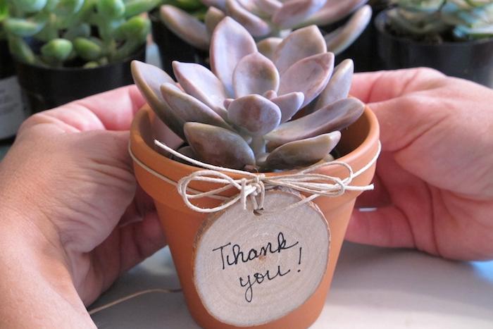 succulent en pot de terre cuite décoré d un rondin de bois avec message merci maitresse, cadeau pour maitresse a fabriquer