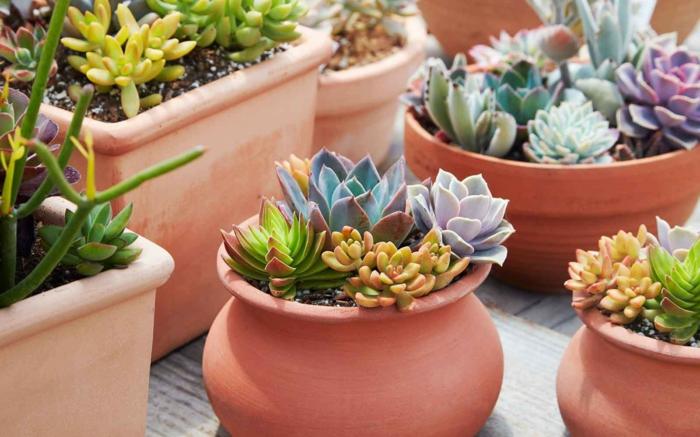 arrangement de plantes succulentes en pots d'argile, jardinières avec plantes grasses