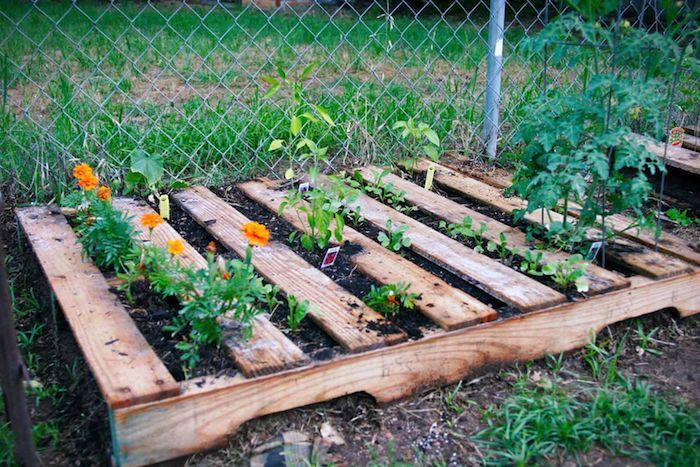 palette de bois posée au sol avec des fleurs et autres plantes aa cultiver, légumes, idee comment creer son propre jardin potager
