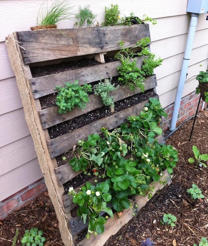 fraises et herbes fraiches cultivées dans une palette de bois avec des cavités remplies de terreau