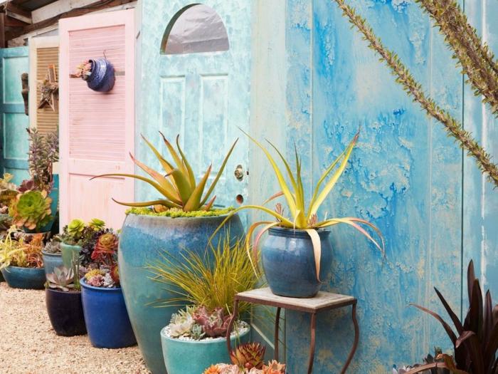 agaves, herbes et succulentes en pots de taille différente, maisonette peinte bleue, gravier