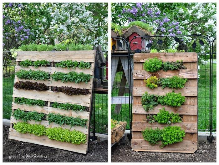 salades et herbes fraiches plantées dans les interstices d une palette en plein air dans un jardin de légumes
