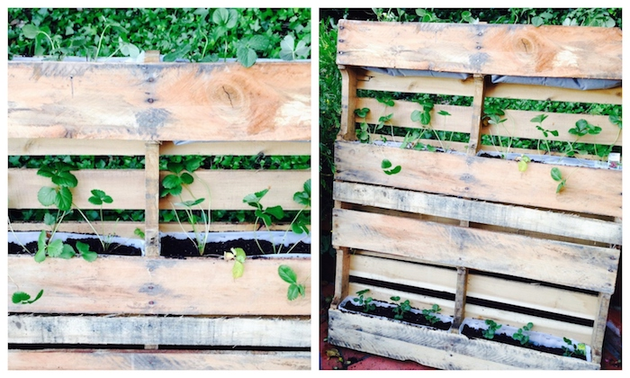 fraisier potager en palette de bois avec des fraises plantées dans bac en plastique, idée fabricarion ajrdiniere diy