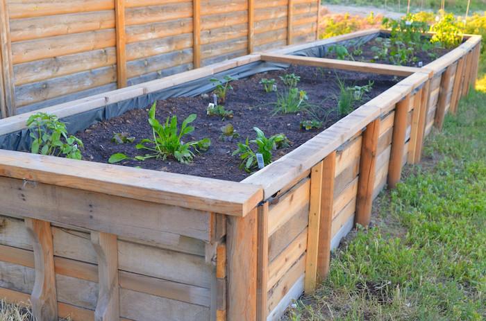 fabriquer un carré potager surelevé avec des plantes vertes, légumes cultivés à l intérieur dans terreau