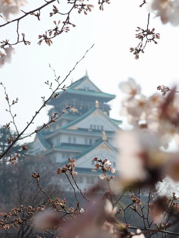 Printemps paysage Japon, vue d'un temple de cerise fleurie, les plus belles photos du monde, les plus beaux paysages du monde