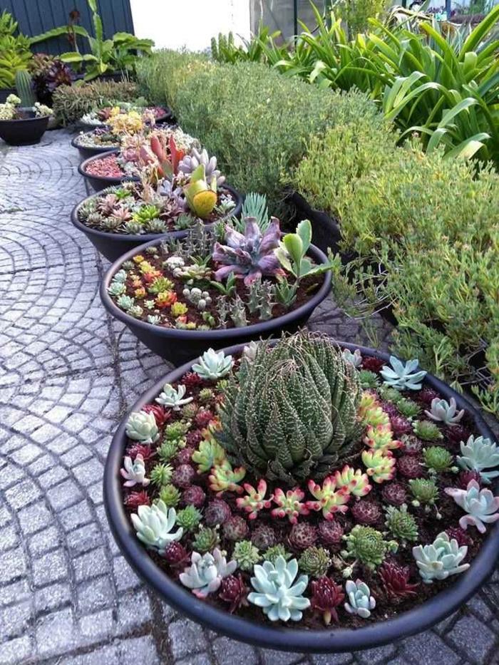 pots de fleurs rangés dans le jardin, succulentes plantées, allée de jardin, coin paradisiaque