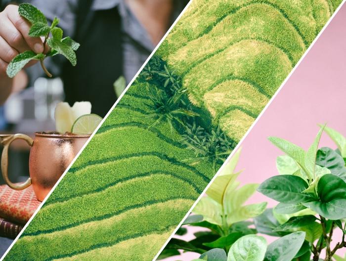 quels ingrédients supplémentaires pour préparer ice tea maison, herbes vertes fraîches pour faire thé glacé chez soi