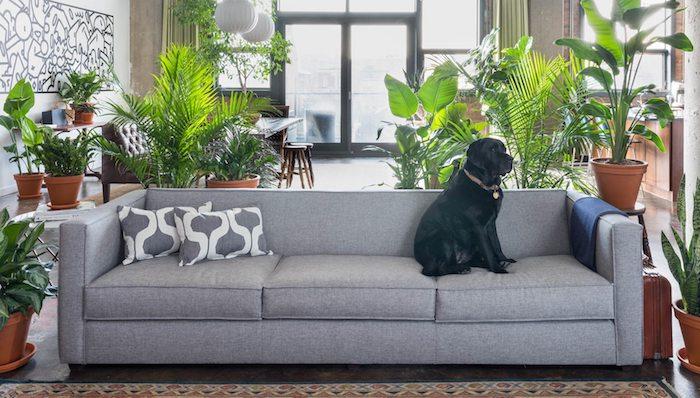 modele de canapé gris, palmiers, bananiers en pots et autres genres de plante tropicale d intérieur dans un grand salon