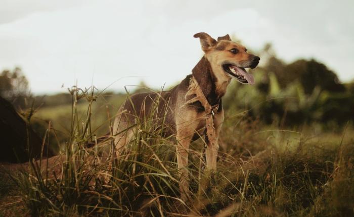 avec quoi nourrir un chien de chasse, alimentation du chien de chasse, ingrédients dans les meilleurs croquettes pour chien