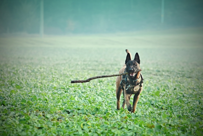 quelles croquettes pour un chien de chasse, idée alimentation chien sportif avec croquettes riches en protéines