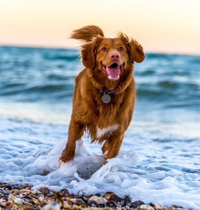 quelle quantité pour nourriture chien sportif, choix de croquettes spécial pour chien sportif, chien qui fait des exercices