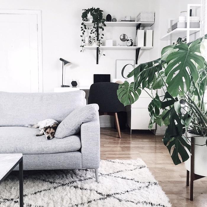 canapé gris scandinave avec chien en dessus, tapis blanc sur parquet bois, monstera deliciosa dans un coin de la piece et deco bureau design scandinave