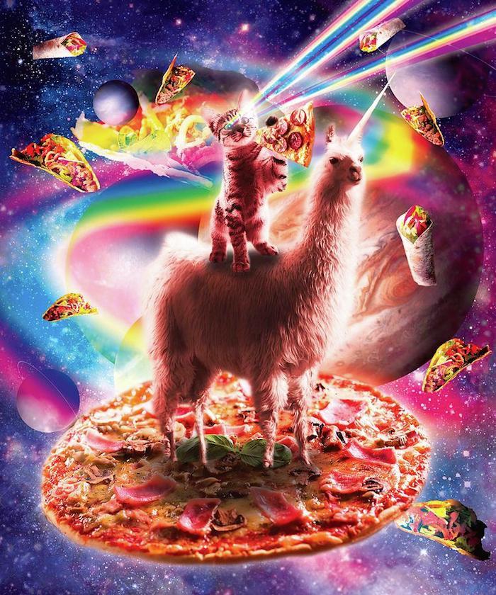Chat et pizza et lama collage original, swag image parfait pour fond d'écran, chat avec yeux laser