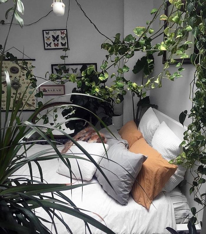 plantes grimpantes lierre d interieur, lit blanc cocooning esprit boheme chic avec coussins decoratifs, mur de cadres botanique et zoologie