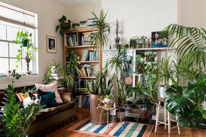 quelle plante d appartement, plusieurs pots de fleurs dans salon à bibliotheque bois, canapé marron, parquet bois, murs blancs