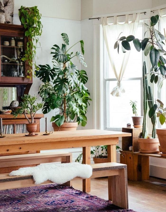 plante appartement, grand pot de monstera et autres plantes en pot, tapis oriental, table et bac bois blond