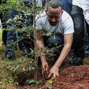 L'Éthiopie a planté 353 millions d'arbres en 12 heures