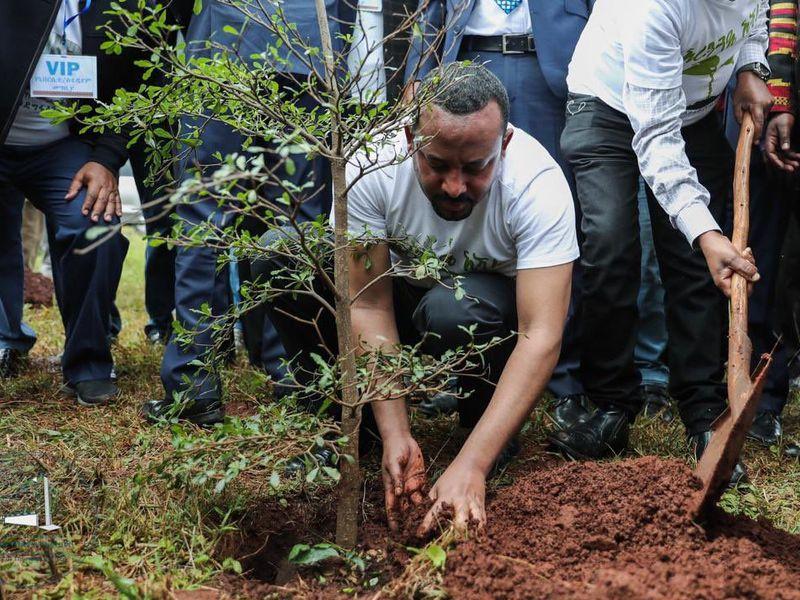 L'Éthiopie vient de planter 353 millions d'arbres en l'espace de 12 heures, un record mondial