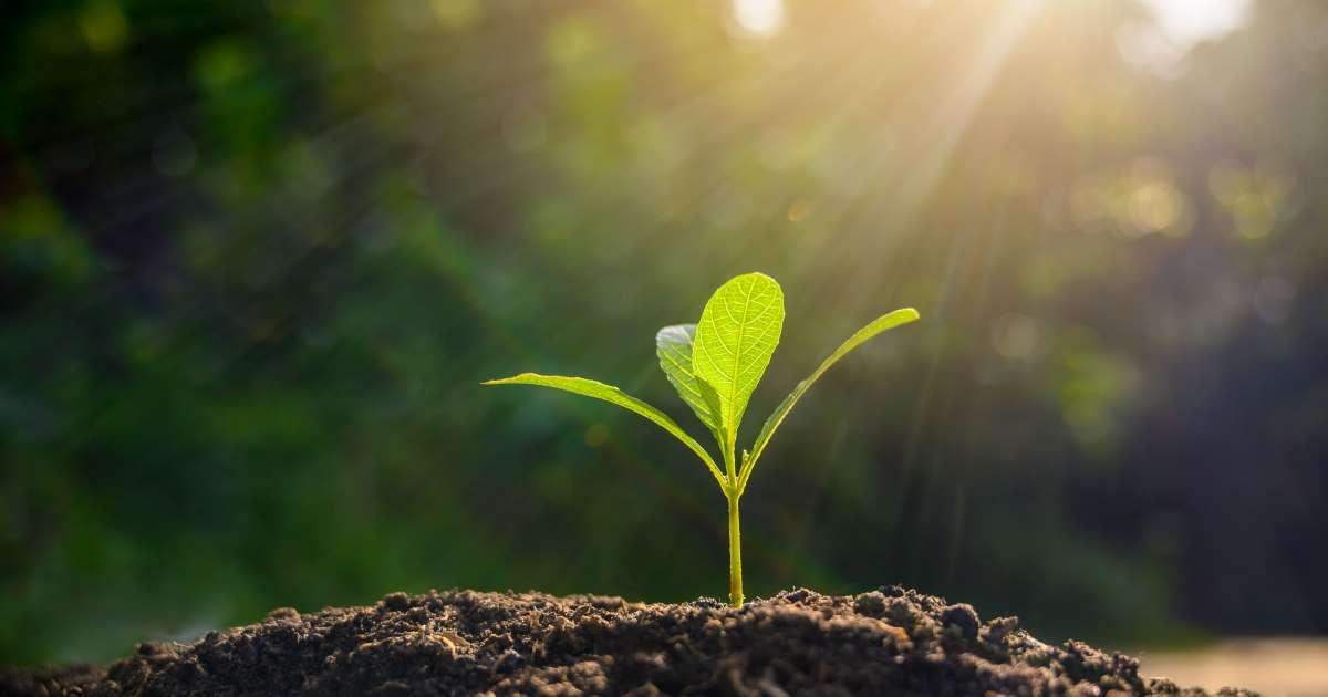 Victime directe de la déforestation depuis un siècle, l'Ethiopie a lancé son Green Legacy dans le but de reboiser le pays et plante 353 millions d'arbres en une demi-journée