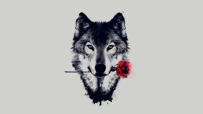 modele de dessin original et réalsite de tete de loup noir et blanc avec une rose rouge dans la bouche