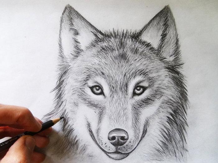 dessin de loup au crayon simple, idée pour apprendre a dessiner par etape un animal