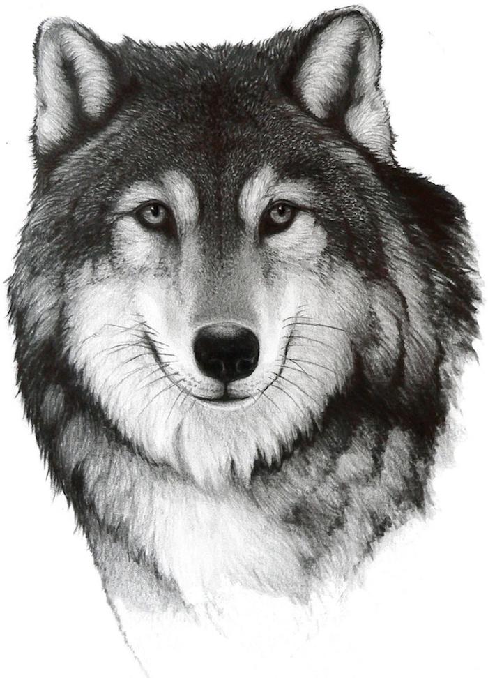 portrait réaliste de loup au pelage gris, noir et blanc, exemple de loup dessin noir et blanc original