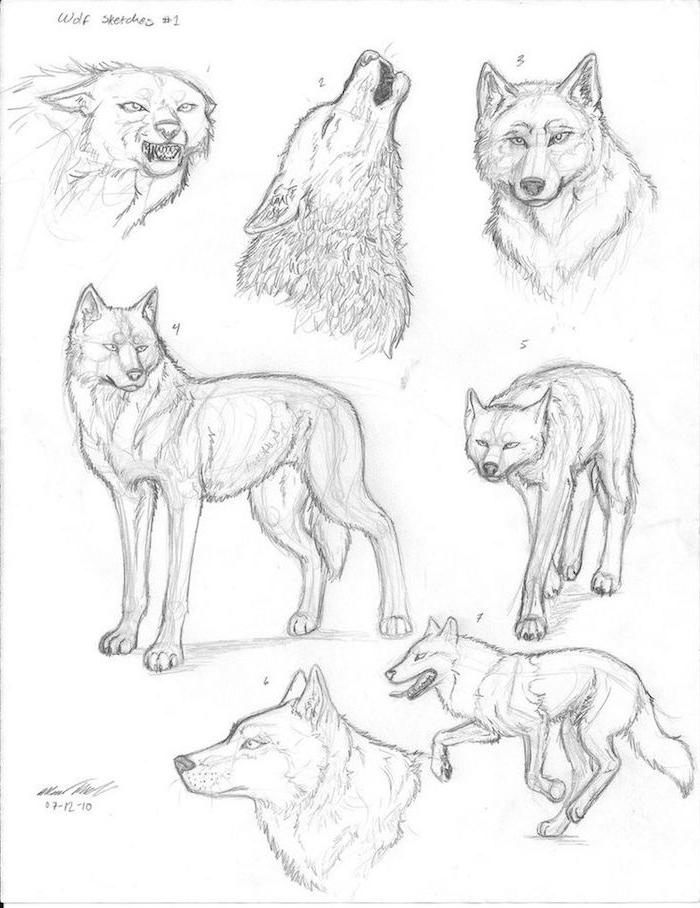 astuces pour dessiner corps et tete de loup, idée de diverses expressions faciales et divers perspectives de dessin