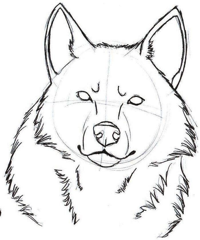 dessiner une tete de loup à partir d un cercle, comment realiser un dessin de loup facile ébauche
