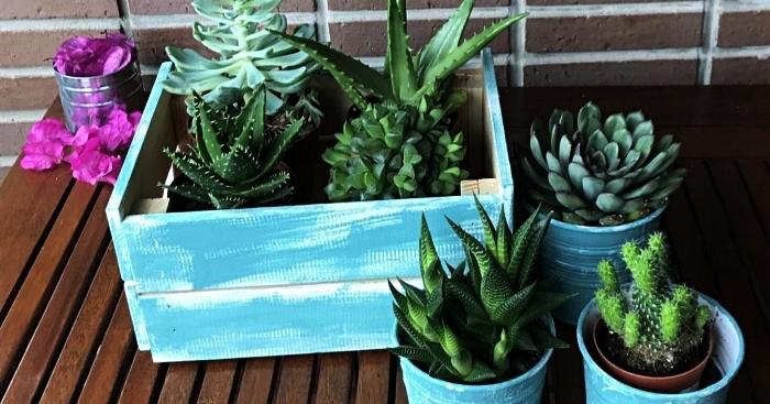 cagette bois deco relookée avec de la peinture à la craie et détournée en jardinière pour succulentes