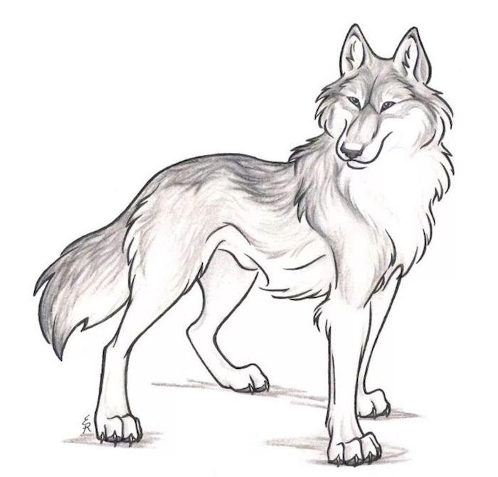 dessin facile a dessiner au crayon, dessin gris, noir et blanc, loup comme symbole de la force
