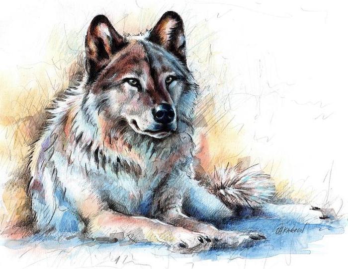 portrait de loup allongé sur le sol, loup dessin couleur aux nuances de gris, marron, blanc et rougeatres