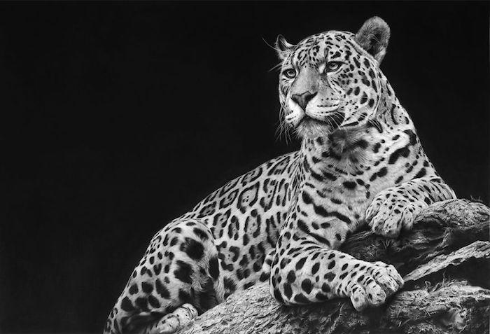 Chat géant magnifique, dessin photo réaliste, comment dessiner un léopard, dessiner un visage