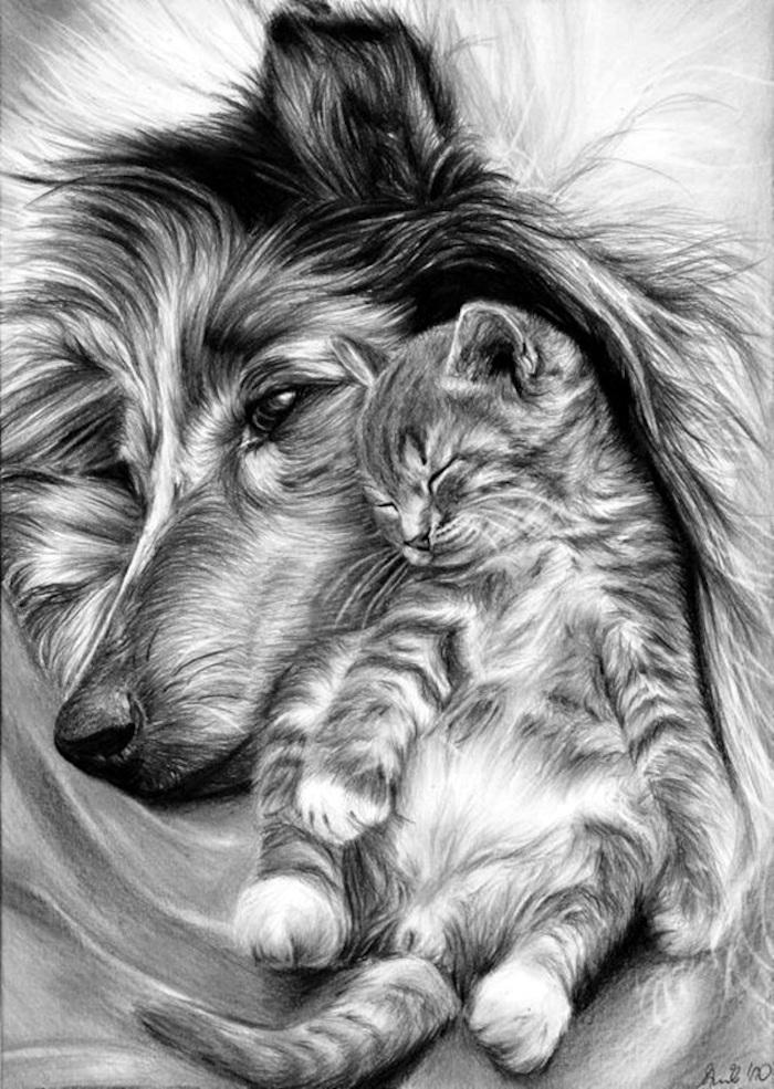 Dessin chaton et chien adorables, realiste dessin facile a reproduire par etape en noir et blanc