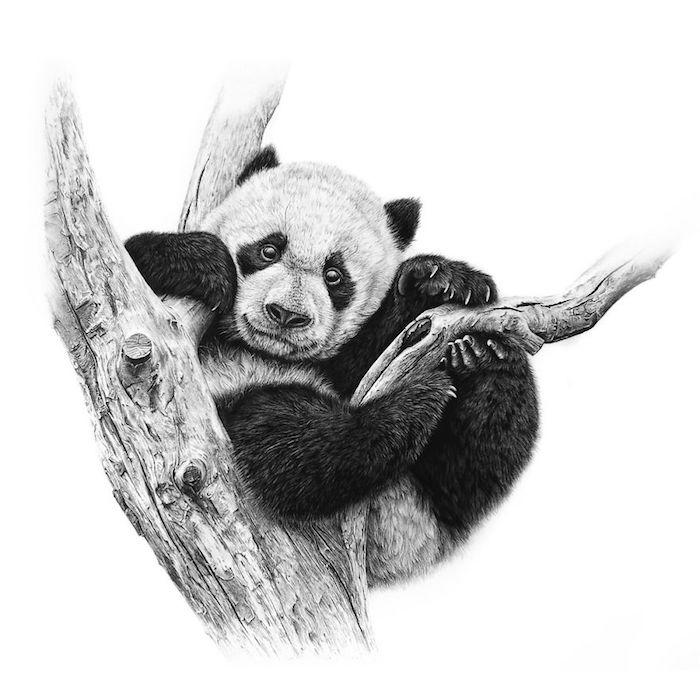 Panda dessin adorable, dessiner un animal mignon, panda noir et blanc sur branche