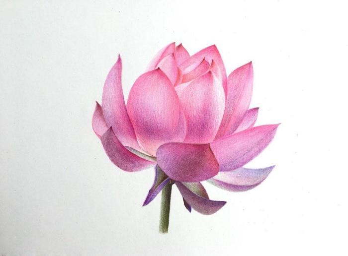 Coloré dessin réaliste fleur de lotus dessin, beau tatouage fleur de lotus coloré
