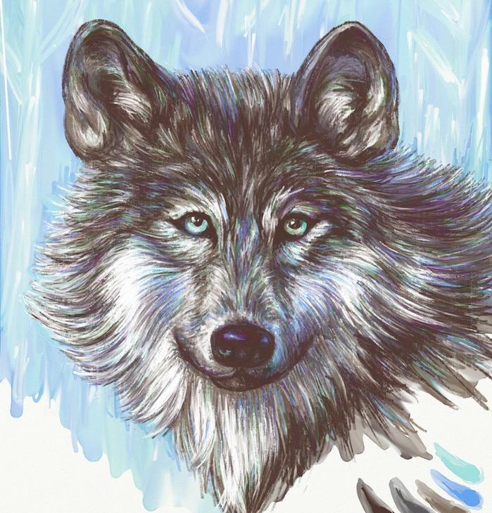 tête animal à dessiner, loup en couleurs réaliste en tonalités de blanc, gris, noir aux éclats colorés de violet et de bleu