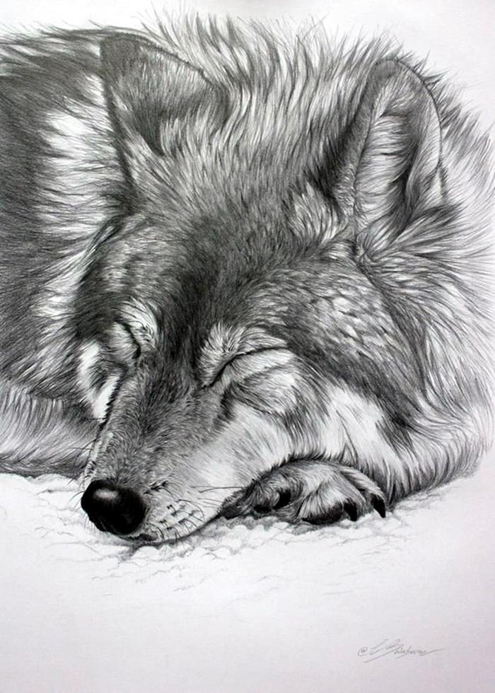 Loup dessin débutant, dessin animal adorable, dessin au crayon réaliste, chien mignon endormi