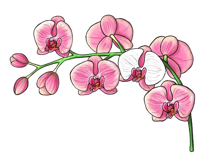 Dessiner une branche d'orchidées roses, beau dessin a dessiner, photo de dessin facile aquarelle