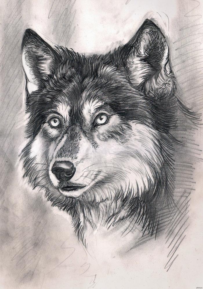portrait de loup graphique réalisé au crayon sur un fond graphique gris et blanc, tête de loup noir et blanc